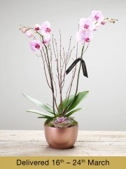 Deluxe Orchid Arrangement