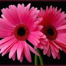 Why Contact Inverness Florists For Summer Flowers